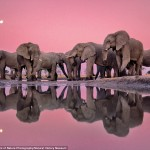 elephnat photo